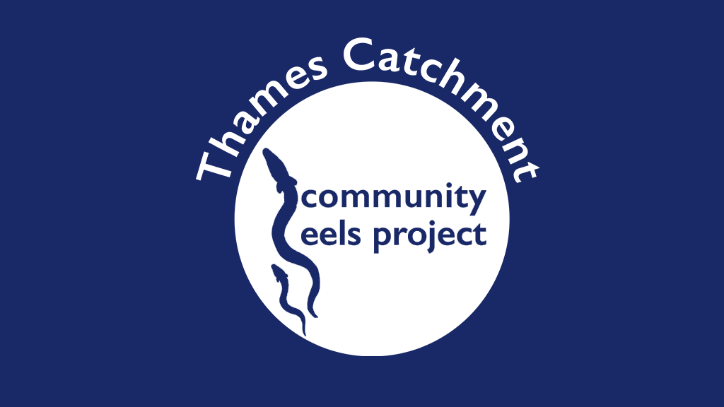 Thames Catchment Community Eels Project