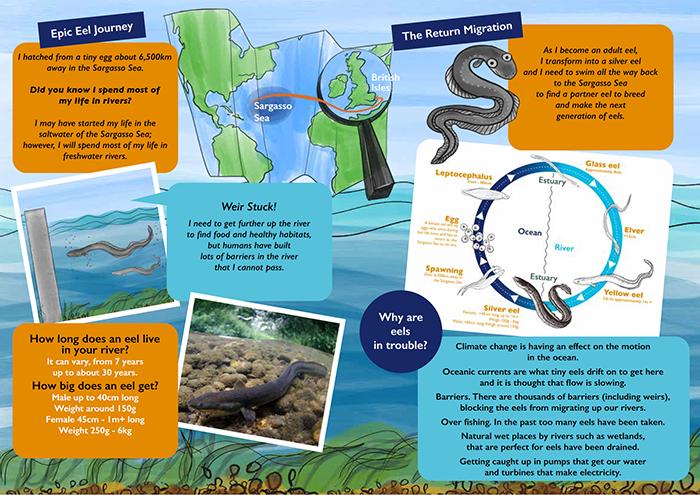 Thames Rivers Trust – Amazing eels tale
