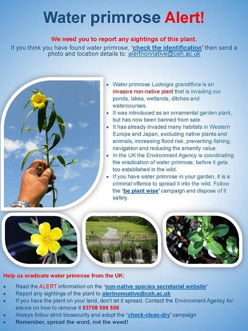 Water primrose-Alert